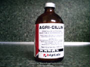 antibiotic.jpg